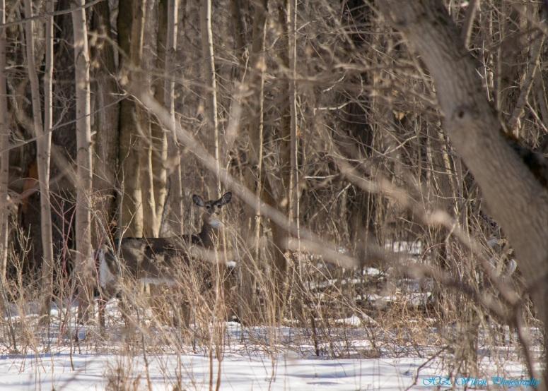 Deer Camoflauge 3